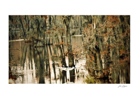 Bayou Dream