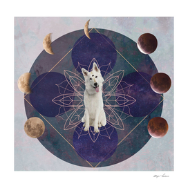 Doggy Mystic Dog