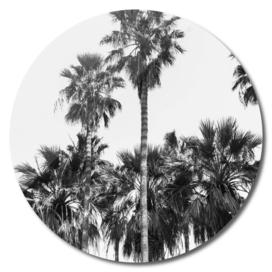 BR_Sabal palmetto II