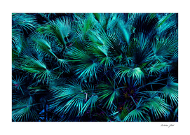 Among the Palm Leaves