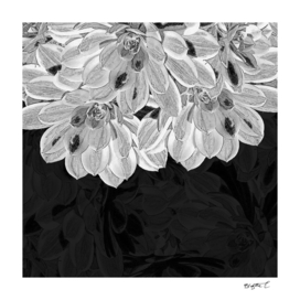 Elegant Black and White Flowers Design