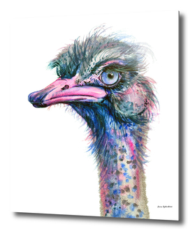 Blue-eyed Ostrich