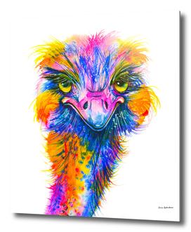 Rainbow Ostrich