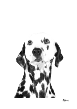 Black and White Dalmatian