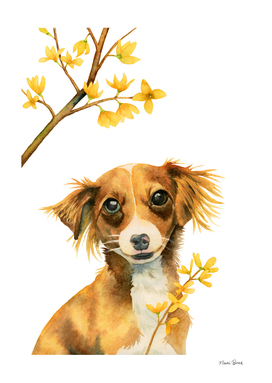 Signs of Spring -  Pup with Forsythia Watercolor Painting