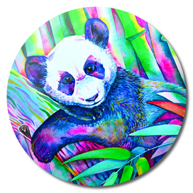 Panda Bliss