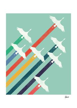 Bird Migration