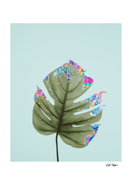 Confetti Monstera