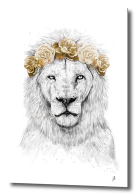 Festival lion (color version)