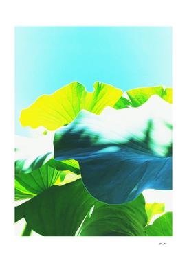 LOTUS MAGIC - Blue, Green and Yellow
