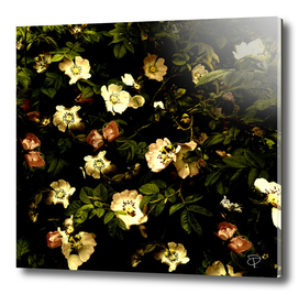 Floral Night I