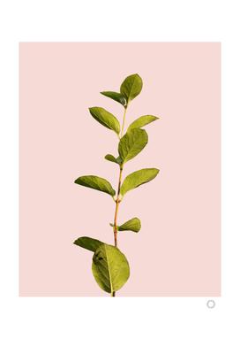 Botanical Art V3