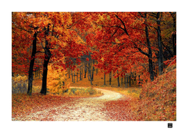 RED LEAF TREES