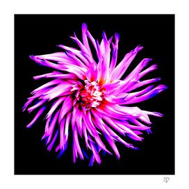 Electro Floral Fun
