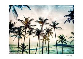 No Palm Trees