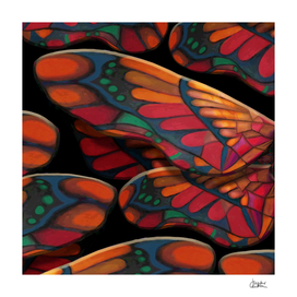 """A thousand colors of butterfly wings"""
