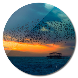 Starling Sunset