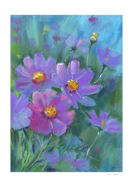 Garden flowers (Cosmos)