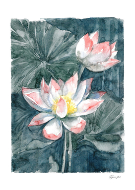 Lotus, watercolor