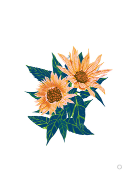 Blush Sunflowers-art-print