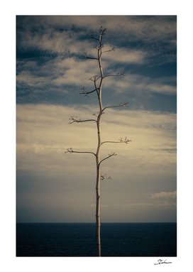 SEA AND TREE