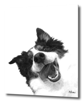 Black and White Happy Dog