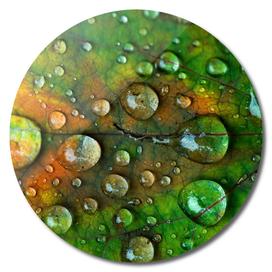 Fall Leaf Macro with Raindrops