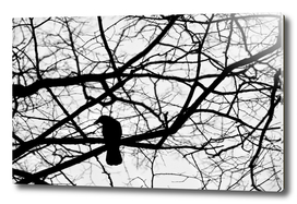 Crow in Abstract Tree Branches