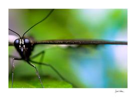 Butterfly Profile in Macro