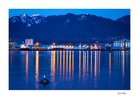 Bird Between Reflected City Lights