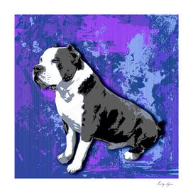 Blue line pit bull portrait