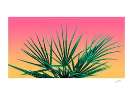 Vaporwave Palm Life - Miami Vibes