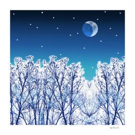 White Woods Snow