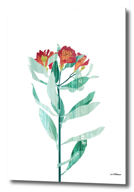 Flower Power #4