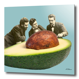 Avocado Discussion
