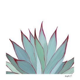 Elegant Agave Fringe Illustration