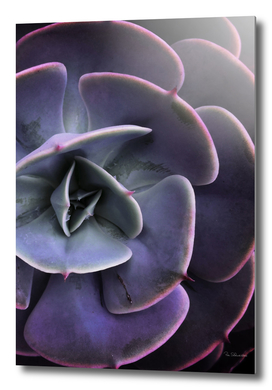 DARKSIDE OF SUCCULENTS VII-1