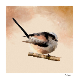 Bird: Long Tailed Tit