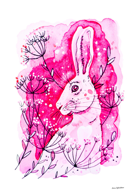 Pink Hare