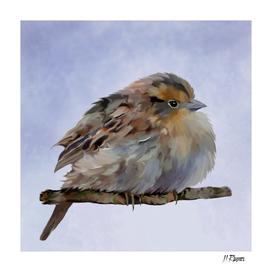 Bird: Colourful Sparrow
