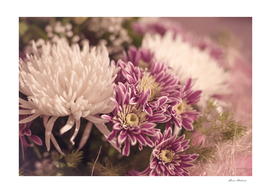 Bouquet Flowers Chrysanthemums White Purple Close-up