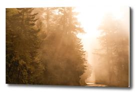 Divine Redwoods