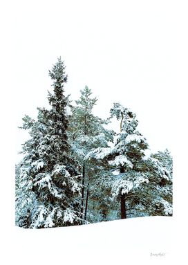 Surrounded by white