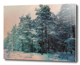 Winter duotone