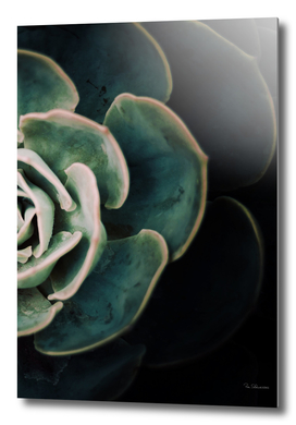 DARKSIDE OF SUCCULENTS IV-2
