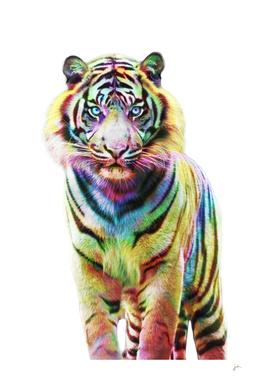 Le Tigre de Couleurs