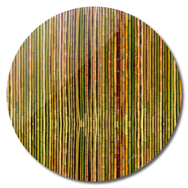 Bamboo fence, texture