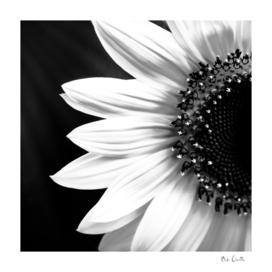 Half A Sunflower