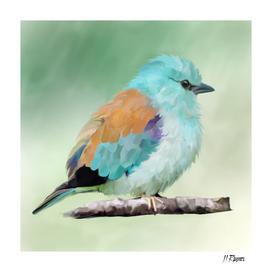 Bird: European Roller