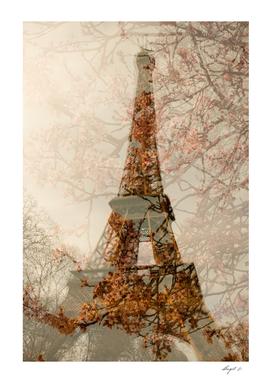 Paris bloosom
